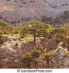 paisagem, montanhas, poderoso, árvores pinho, e, junípero,...