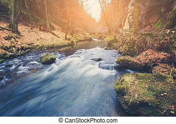 paisagem natureza, outono, rio, floresta