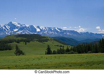 paisagem natureza, prado, e, montanhas, fauna, de, altay