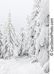 paisagem, neve, árvores, coberto, abeto, inverno