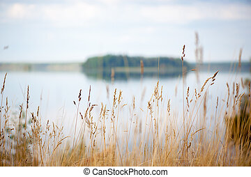 paisagem outono, com, lago