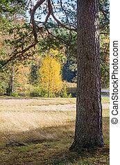 paisagem outono, em, a, floresta