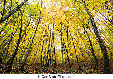 paisagem outono, em, um, floresta