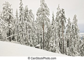 paisagem, pele, árvores inverno