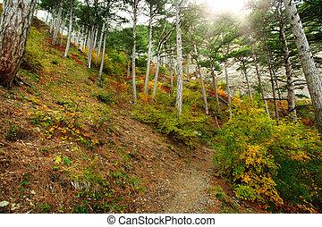 paisagem, rastro, em, floresta outono