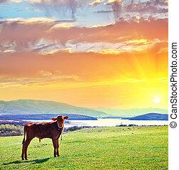 paisagem rural