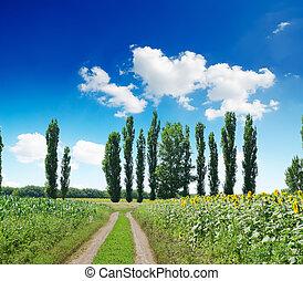 paisagem rural, com, estrada, sob, profundo, azul, céu nublado
