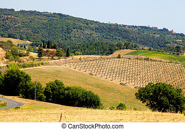 paisagem, tuscany, panorâmico, itália, vista, típico
