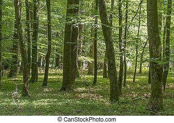 paisagem, verão, floresta, tempo