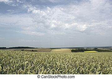 paisagem, verão, pictorial, tempo, rural, agricultura