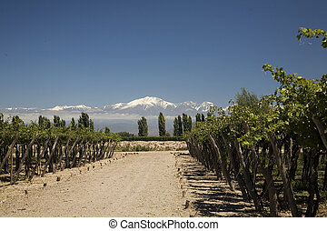 paisagem, vinho