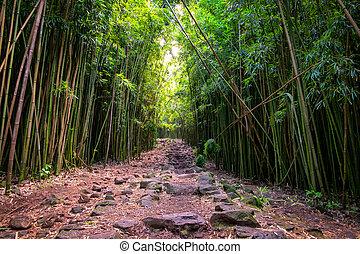 paisagem, vista, de, floresta bambu, e, áspero, caminho,...
