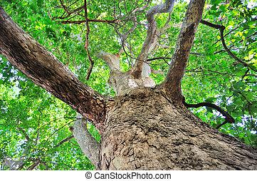 paisaje árbol, cielo