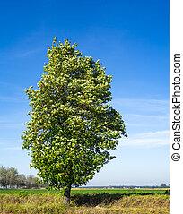 paisaje árbol, naturaleza