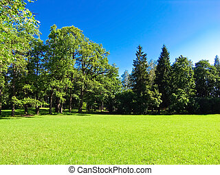 paisaje, bañado, en, luz del sol, césped, y azul, cielo