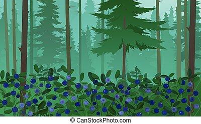 paisaje, bosque, arándanos
