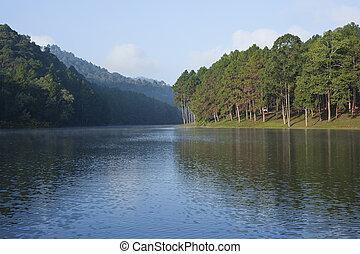 paisaje, con, árboles de pino, lago