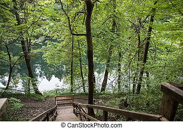 paisaje, con, bosque, río