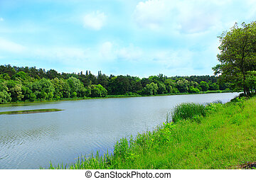 paisaje, con, bosque verde, y, río