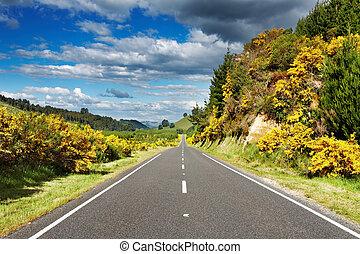 paisaje, con, camino, y, bosque