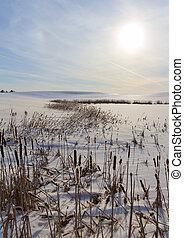 paisaje de invierno, con, caña
