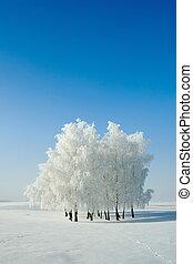 paisaje de invierno, y, árboles