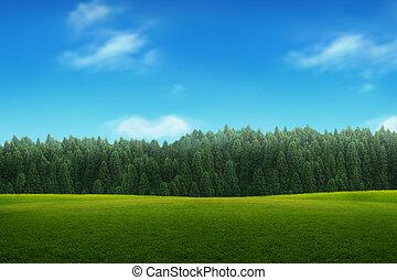 paisaje, de, joven, bosque verde, con, cielo azul