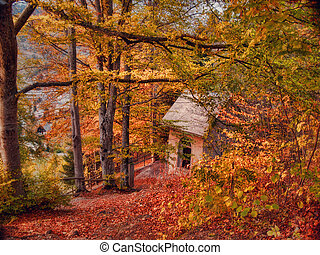 paisaje de otoño, -, cabaña, en, el, bosque