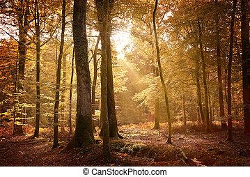 paisaje de otoño, en, el, bosque nuevo