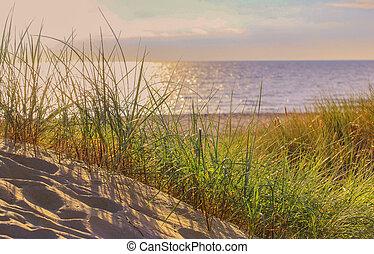 paisaje, dunas, seafront, arena, pasto o césped