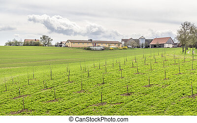 paisaje, farmstead