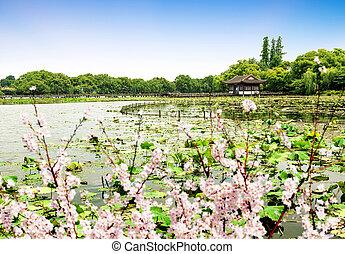 paisaje, oeste, hangzhou, lago
