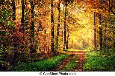paisaje, rayos, luz, otoño, tibio, bosque