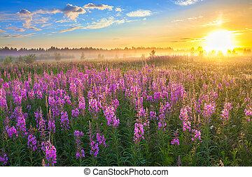 paisaje rural, con, el, salida del sol, y, florecer, pradera