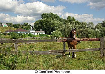paisaje rural, con, un, caballo, rusia