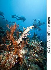 paisaje, submarino, buzo, rojo, sea.