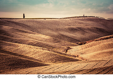 paisaje, Toscana,  panorama, campos, Italia, otoño, estación, cosecha