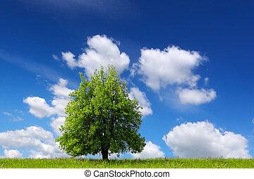 paisaje verde