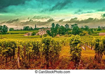 paisaje, vino