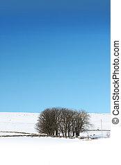 paisaje, wintery