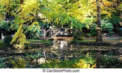 paisible, automne, lac