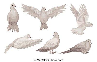 paix, pigeons, colombe, beau, amour, collection, illustration, foi, symbole, différent, vecteur, poses