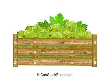 paka, agrest, tło., berries., boks, odizolowany, soczysty, biały