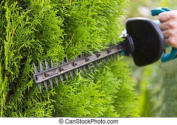 palántázás, kert, work., greenery., profi, eszközök, kertész