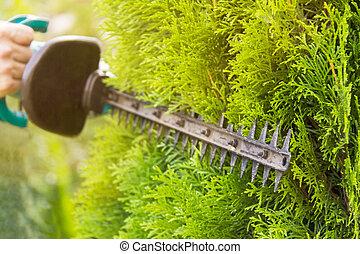palántázás, kert, work., lomb, profi, eszközök, kertész