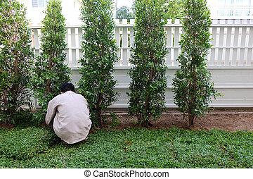 palántázás, udvar, kert munka, fa, udvar, fű