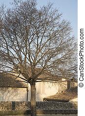 palais, quadrado, inverno, des, árvore, avignon, papes