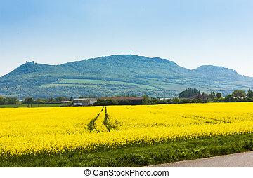 Palava with rape field, Czech Republic