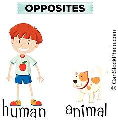 palavras, animal, human, oposta