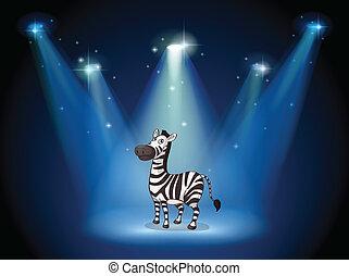 palcoscenico, riflettori, zebra